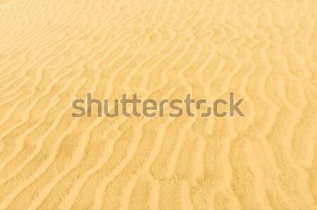Wakacje przygoda słoneczny Peru wydma Zdjęcia stock © njaj
