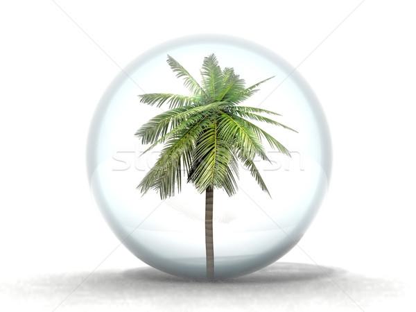 Foto stock: Palmera · burbuja · árbol · seguridad · azul · espejo