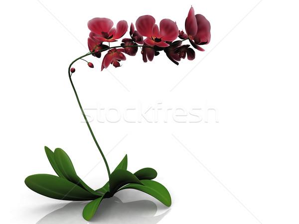 Rot Orchidee weiß Blume Natur Schönheit Stock foto © njaj