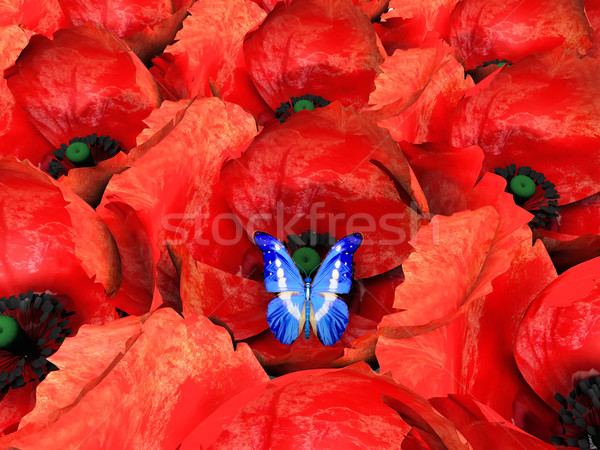 the butterfly and poppys Stock photo © njaj