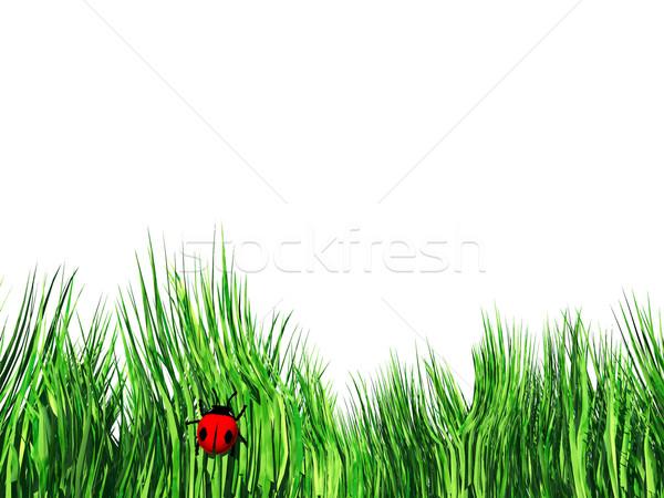 Grama joaninha verão verde animal inseto Foto stock © njaj