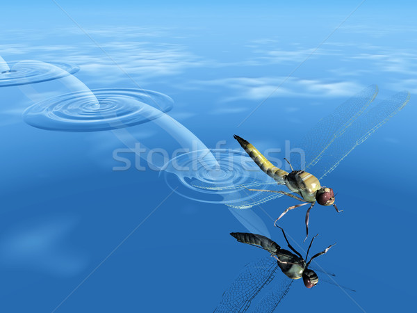 蜻蜓 跳 水 春天 湖 生活 商業照片 © njaj