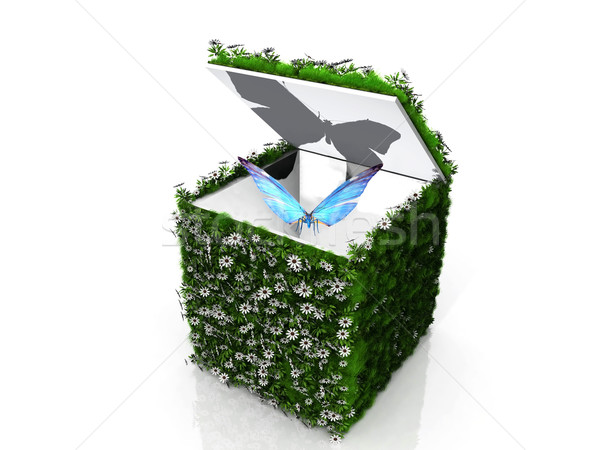 the butterfly in a green box Stock photo © njaj