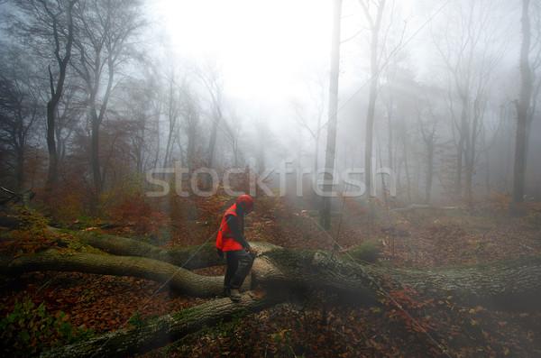 Favágó erdő munka dolgozik munkás állás Stock fotó © njaj