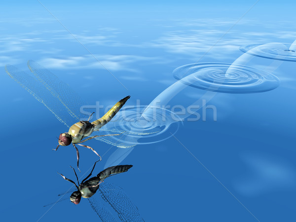 dragonfly  jump on the water Stock photo © njaj