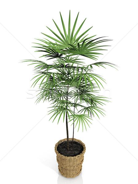 Branco natureza projeto verde folhas plantas Foto stock © njaj