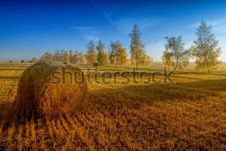 straw bale and autumn trees Stock photo © njaj