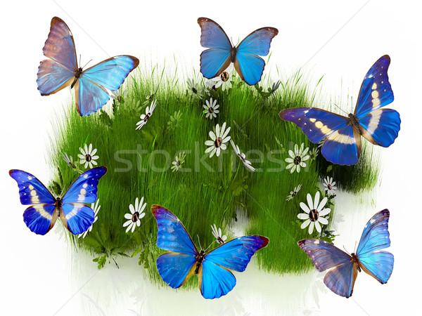 Farfalla bella ali natura giardino bellezza Foto d'archivio © njaj