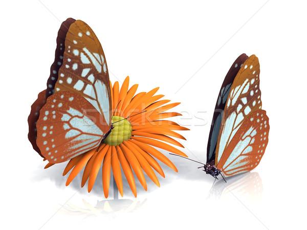 Schmetterling schönen Flügel Natur Schönheit Sommer Stock foto © njaj
