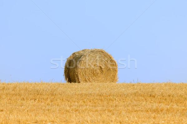 Feno fardo paisagem verão palha rural Foto stock © njaj