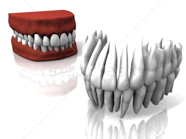 the teeth and false teeth Stock photo © njaj