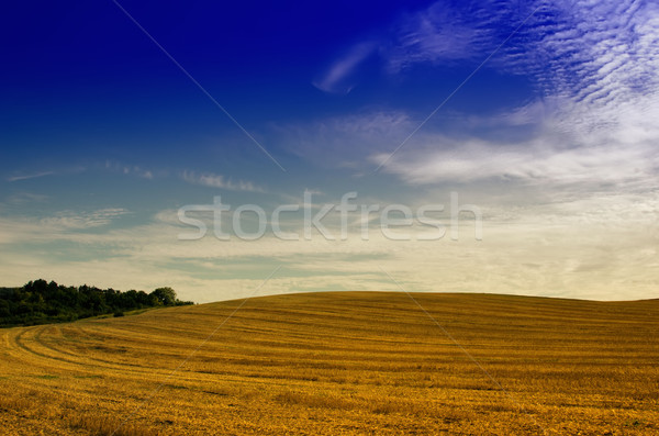 the fields after the harvest Stock photo © njaj