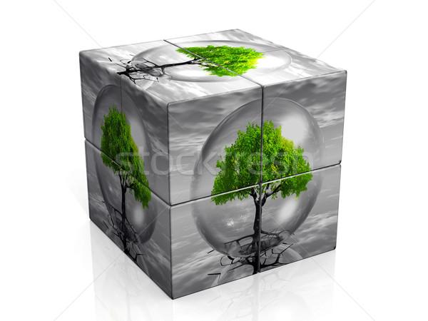 the box and the tree Stock photo © njaj
