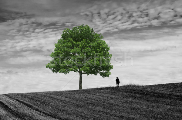The walker alone in the fields Stock photo © njaj