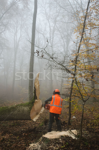 Lenhador floresta árvore madeira ferramentas trabalhando Foto stock © njaj