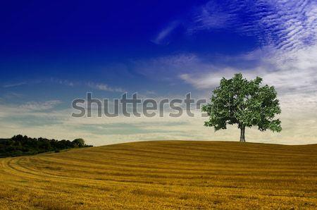 Boom stro baal groene boom landschap machine Stockfoto © njaj