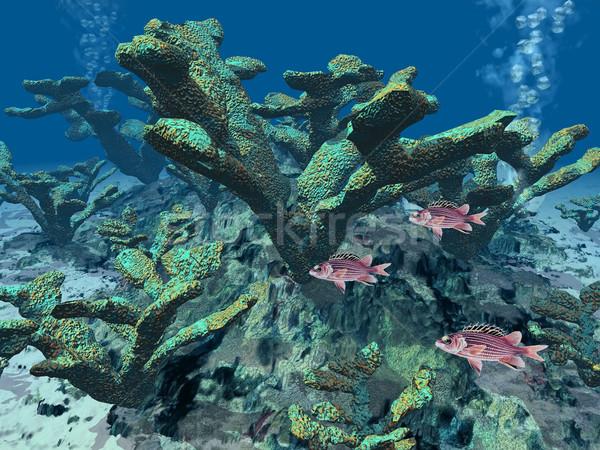 サンゴ 魚 ボトム 海 美 海 ストックフォト © njaj