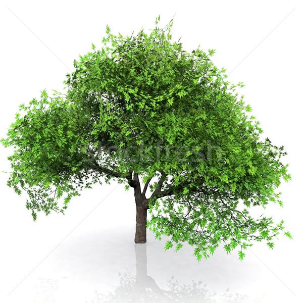 Groene boom groene kleur plantaardige tak milieu Stockfoto © njaj