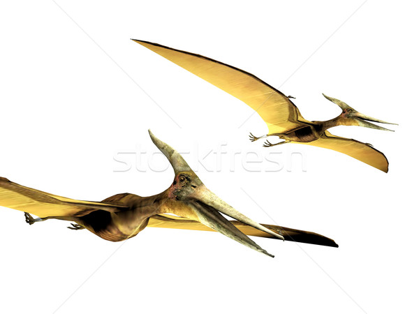 pterodactyls  on a white background Stock photo © njaj