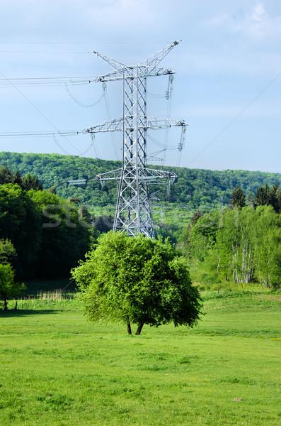 the little tree and the large electricity pylon Stock photo © njaj