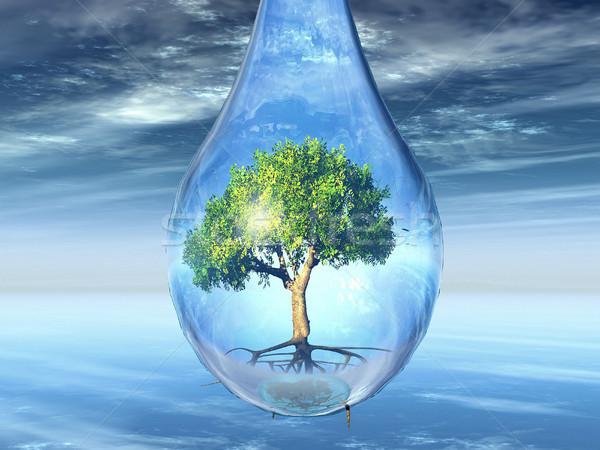 Boom drop groene boom water natuur tijd Stockfoto © njaj