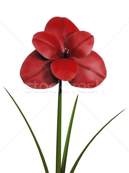 Сток-фото: красный · цветок · белый · весны · любви · зеленый