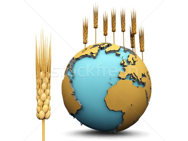 earth and wheat Stock photo © njaj