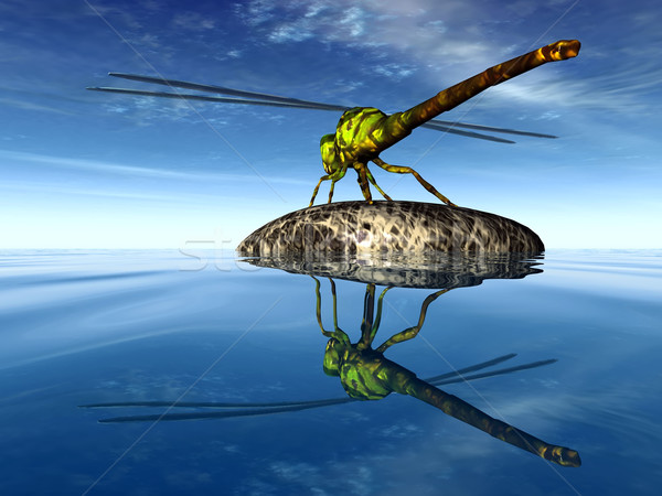 Libel steen dier vleugels draak insect Stockfoto © njaj