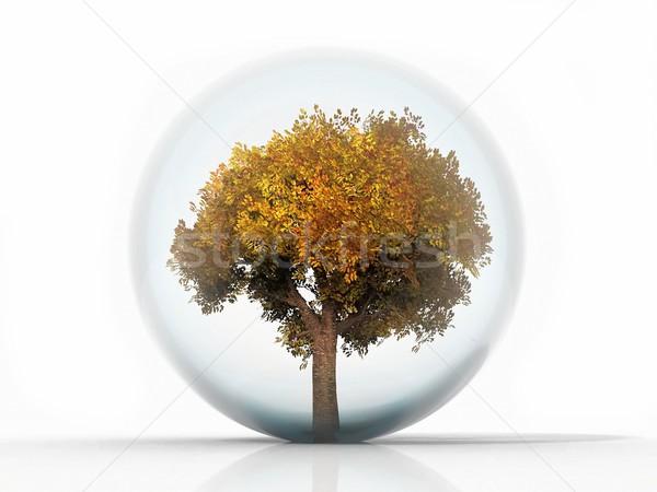 осень дерево пузыря завода безопасности растительное Сток-фото © njaj