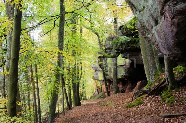Piaskowiec lasu charakter podróży piasku rock Zdjęcia stock © njaj