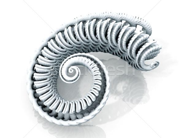 Stock photo: spiral of mollusc