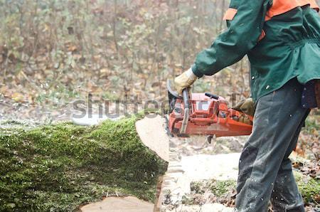 Lenhador floresta árvore madeira homens ferramentas Foto stock © njaj
