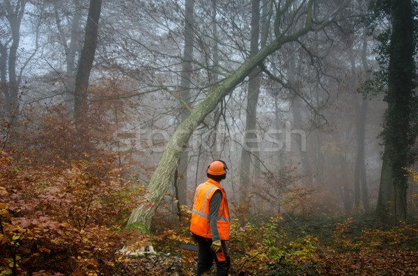 Lenhador árvore trabalhando trabalhador ferramenta segurança Foto stock © njaj