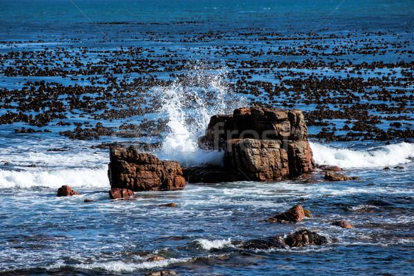 Mer Afrique du Sud plage Photo stock © njaj