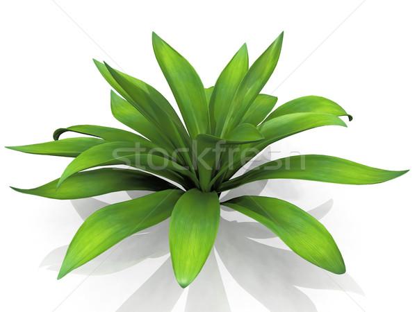 Agave белый цветок природы лист пустыне Сток-фото © njaj