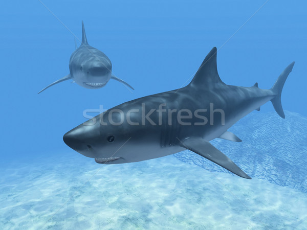sharks  in the blue water Stock photo © njaj