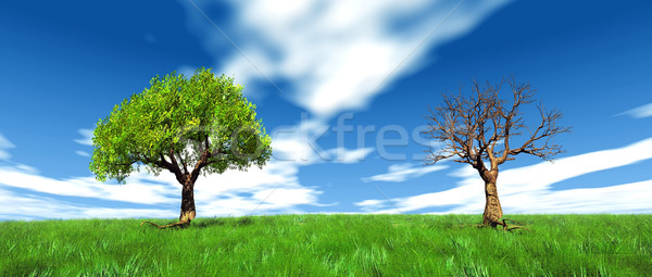 live and dead tree Stock photo © njaj
