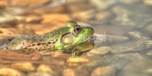 Zielone żaba posiedzenia wody oka tle Zdjęcia stock © nmarques74