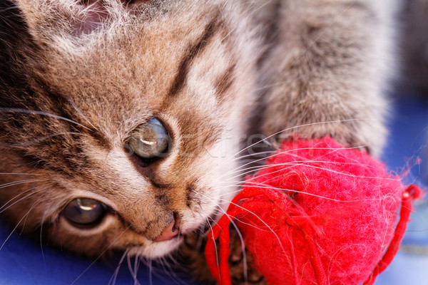 Cute small cat Stock photo © Nneirda
