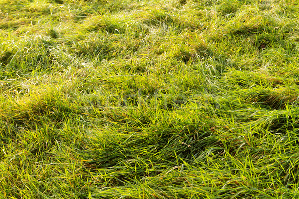 Green grass Stock photo © Nneirda