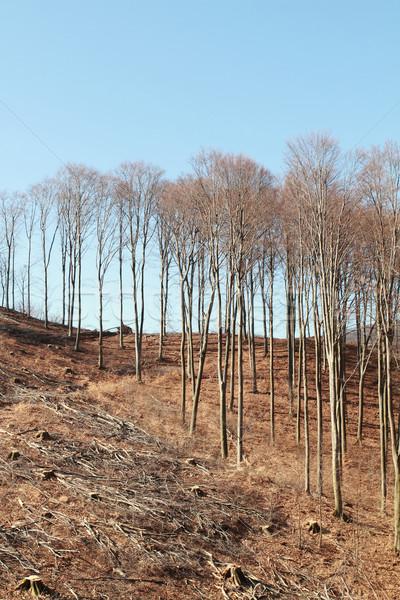 Ipari papír textúra fa erdő tájkép Stock fotó © Nneirda