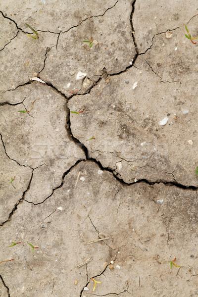Saline soil Stock photo © Nneirda