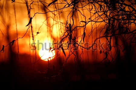 Sunset background Stock photo © Nneirda