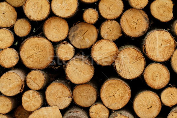 Logging Stock photo © Nneirda