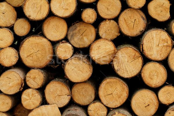 Fotoğraf orman ağaç inşaat sanayi Stok fotoğraf © Nneirda