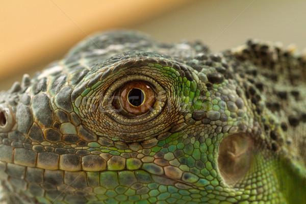 Iguana eye Stock photo © Nneirda