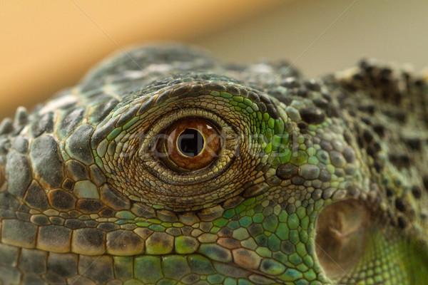 Leguaan oog macro fantastisch groene Blauw Stockfoto © Nneirda