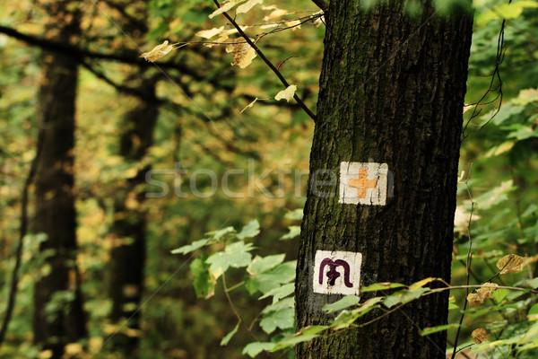 Yürüyüş imzalamak fotoğraf yüksek ağaç gövdesi çim Stok fotoğraf © Nneirda
