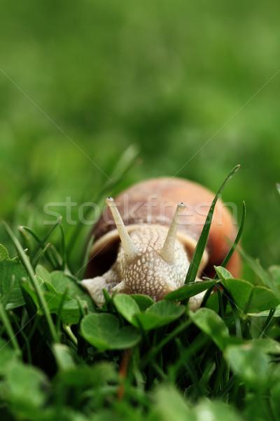 улитки спираль дождь трава продовольствие глазах Сток-фото © Nneirda