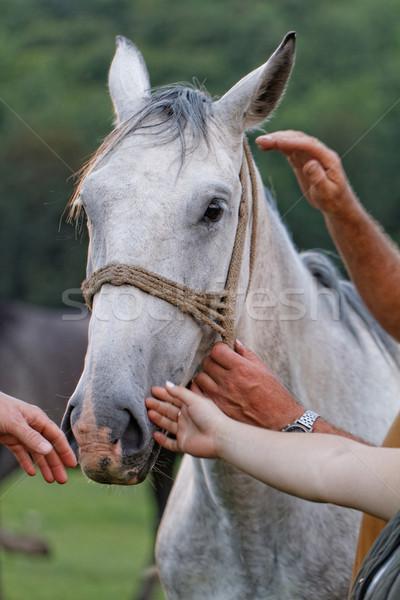 White horse Stock photo © Nneirda